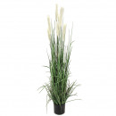 Potted pampas grass, height 170cm, green